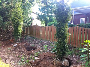 Plant Evergreens for Privacy