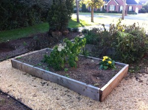 Cedar raised bed for veggies and herbs.
