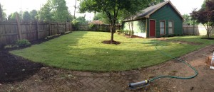 Sod, mulch, and specimen shrubs transform this neglected back yard!