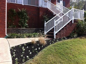 White pansies and ornamental grasses with black mulch add interest.