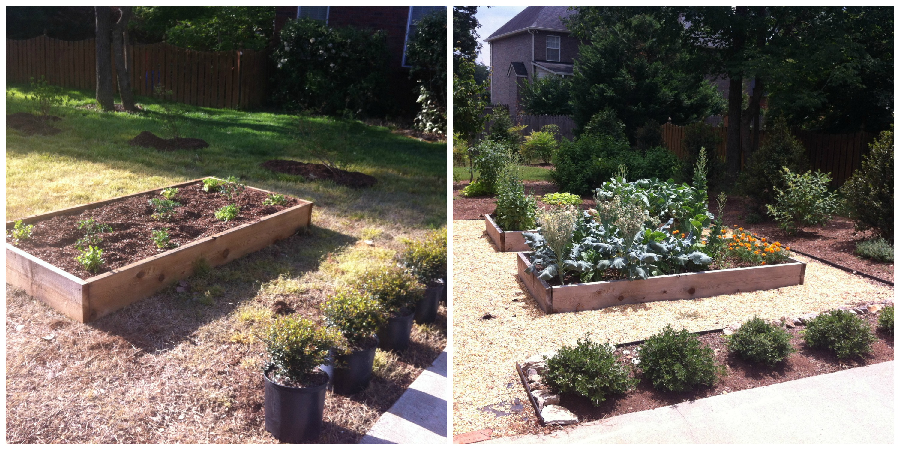 Raised Beds For Edible Landscaping Before And After