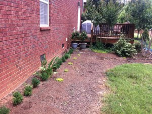 Start with small shrubs to save money. They will grow over many years, eventually reaching the window sill.