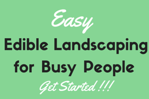 Easy Edible Landscaping for Busy People