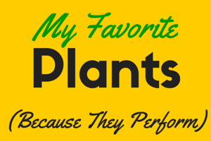 My Favorite Landscape Performance Plants