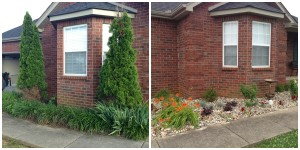 Arborvitae removed, replaced with glossy abelia and hydrangea border.